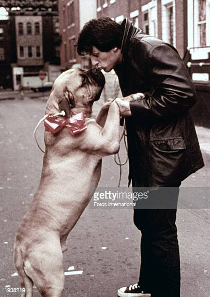 American actor Sylvester Stallone as Rocky Balboa kissing a dog in a still from the film 'Rocky' directed by John G Avildsen 1976