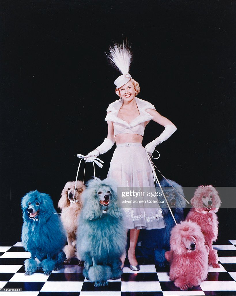 American actress and singer Doris Day poses with an array of multi-coloured poodles, 1952. Originally used on the cover of 'Collier's' magazine - pub. 9th August 1952.