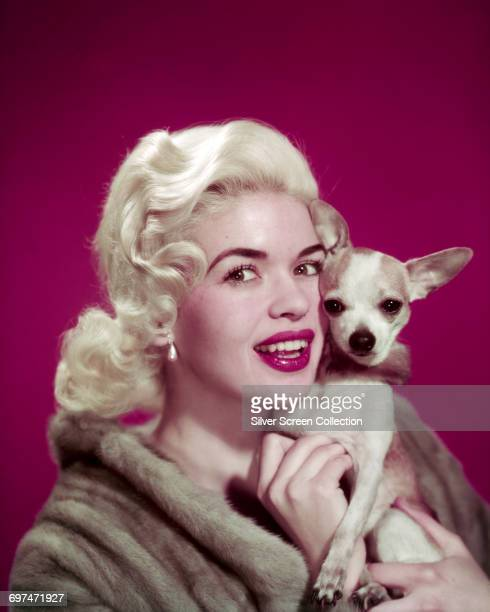 American actress Jayne Mansfield with a chihuahua circa 1955
