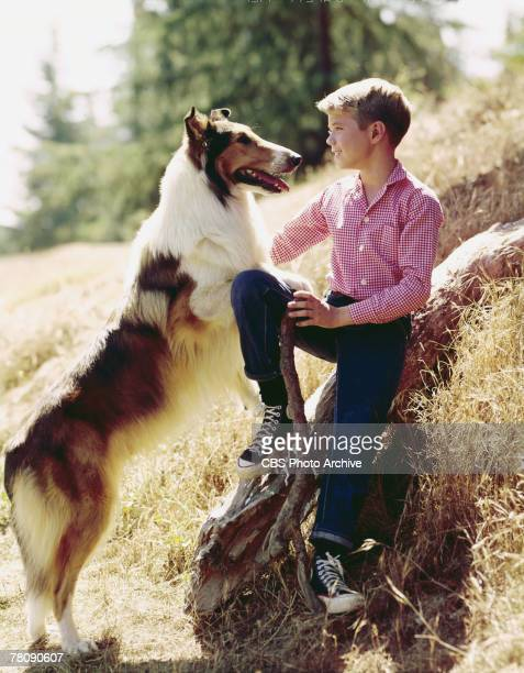 American animal actor Baby as Lassie and child actor Jon Provost as Timmy look into one another's eyes in a promotional still for the television show...