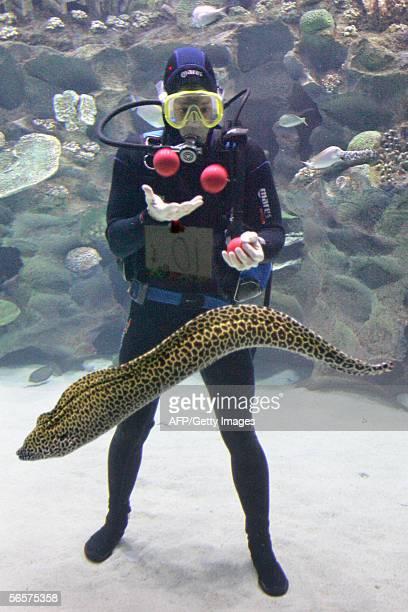 American Ashrita Furman juggles balls underwater while a moray eel swims past at Aquaria KLCC in downtown Kuala Lumpur 12 January 2006 in an attempt...