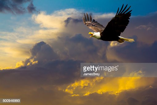 American Bald Eagle Flying in Spectacular Dramatic Sky