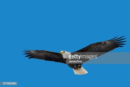 American Bald Eagle Flying, Wings Spread, Blue Sky, Freedom, Strength