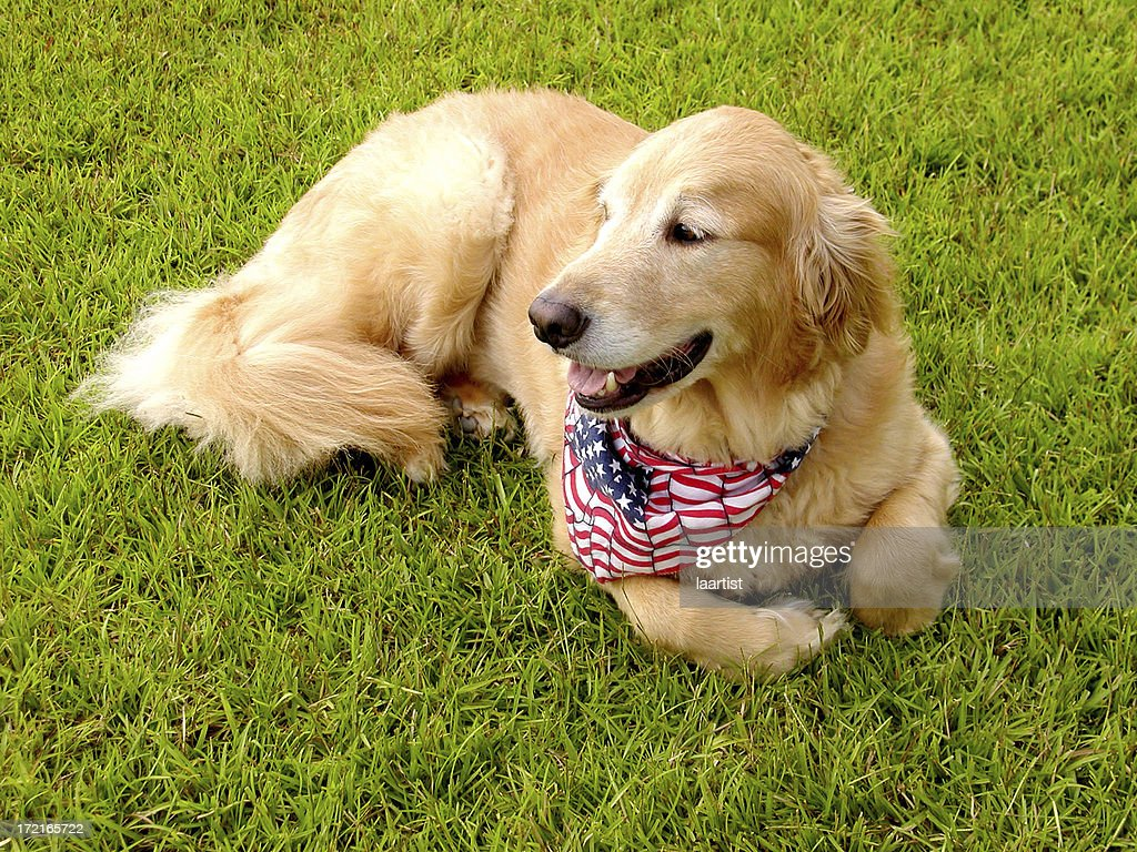 American Buddy. : Stock Photo