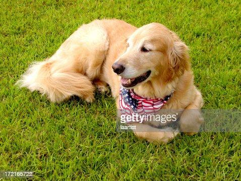 American Buddy. : Stock Photo