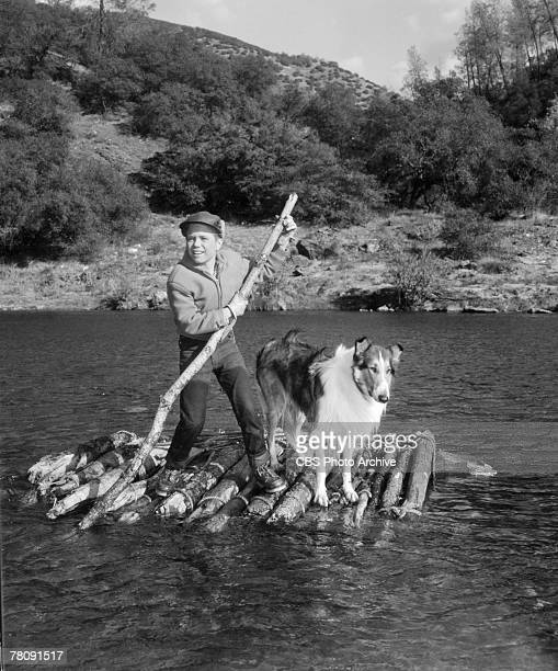 American child actor Jon Provost as Timmy and animal actor Baby as Lassie float in a river on a raft in an episode of the televsion series 'Lassie'...