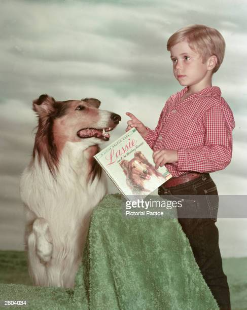American child actor Jon Provost holding a copy of the book 'Lassie and the Daring Rescue' poses with Lassie in a promotional portrait for the...