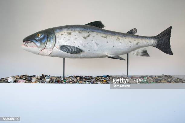 American conceptual artist Mark Dions The Salmon of Knowledge Returns at the Irish Museum of Modern Art on 07th April 2017 in Dublin Republic of...
