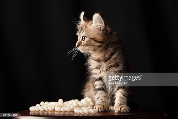 gato efeito