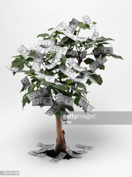 American Dollars on a Bonsai Tree