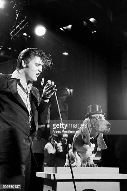 Alfred Wertheimer/Getty Images American musician Elvis Presley performs to a hound dog during a rehearsal for his appearance on the 'Steve Allen...