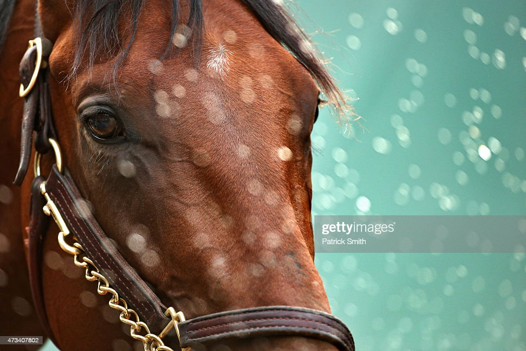 American Pharoah is bathed at the barn after training for the 140th Preakness Stakes at Pimlico Race Course on May 15 2015 in Baltimore Maryland