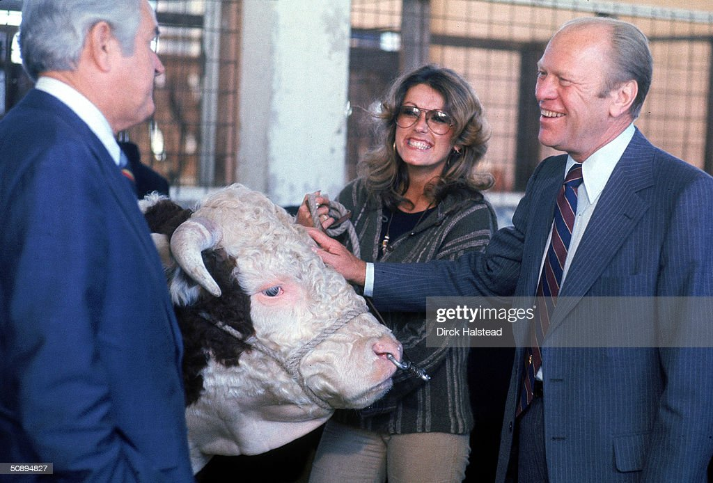 American president Gerald Ford pets a cow as he shares a laugh with former Texas governor John Connally (1917 - 1993) and and unidentified woman at Texas State Fair during Ford's re-election campaign, Texas, Octover 1976.