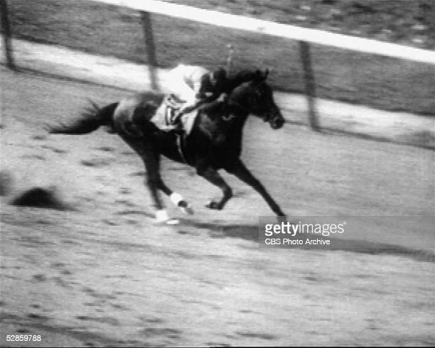 American professional jockey Eddie Arcaro rides American thoroughbred Citation down the final stretch at the Belmont Stakes to capture the Triple...