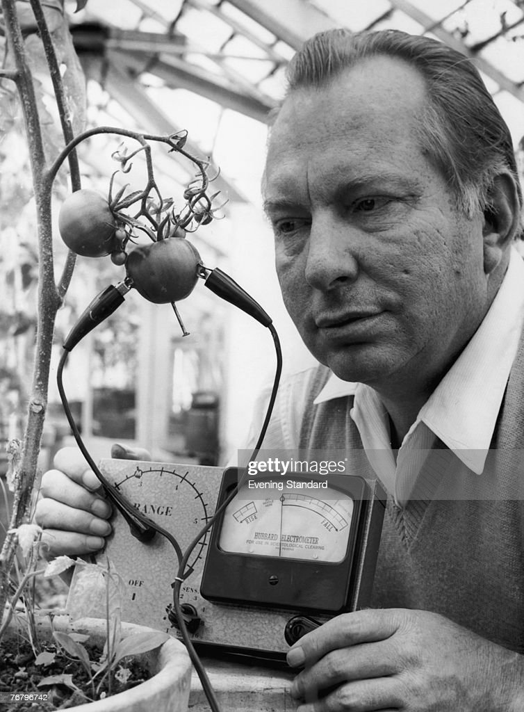 American science fiction writer L. Ron Hubbard (1911 - 1986), founder of the Church of Scientology, uses his Hubbard Electrometer (patent pending) to determine whether tomatoes experience pain, 1968. His work led him to the conclusion that tomatoes 'scream when sliced'.