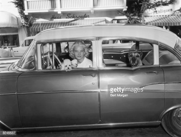 American socialite C Z Guest sits in a parked car with two dogs a poodle and a Great Dane Worth Avenue Palm Beach Florida