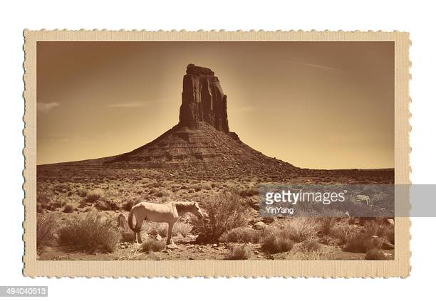 American Southwest Landscape with White Horse Retro Postcard