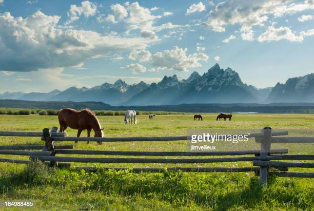 American West Horses and Grand Teton Rocky Mountains