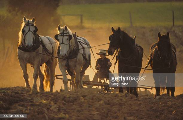 Amish boy (12-14) plowing with team of horses, spring