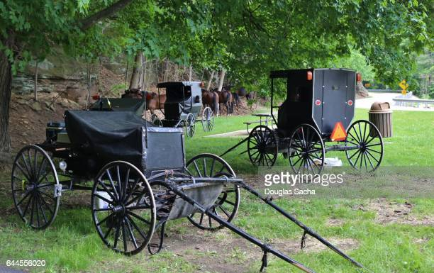 Amish carriages and horses parked under a tree area