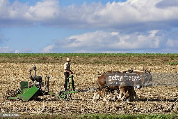 Amish farmer tilling with horse drawn machinery