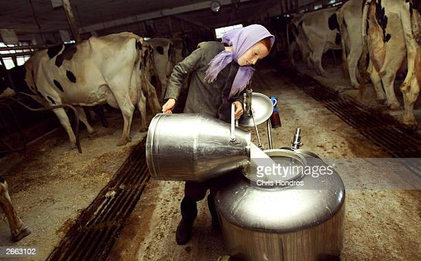 Amish girl Elizabeth Stoltzfus pours milk after a mass cow milking October 22 2003 in Wakefield Pennsylvania The Amish traditionalist farmers who...
