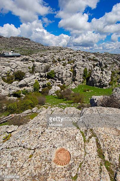 Ammonite fossil at theTorcal in Antequera Erosion working on Jurassic limestones Malaga province Andalusia Spain
