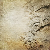 ammonite, fossil on brown paper can be used as background