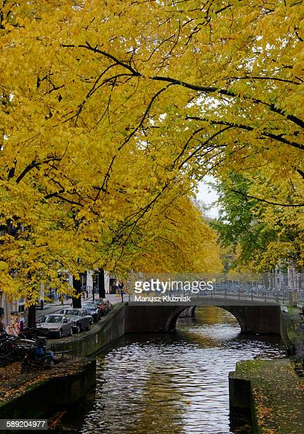 Amsterdam canal, small bridge and trees in fall