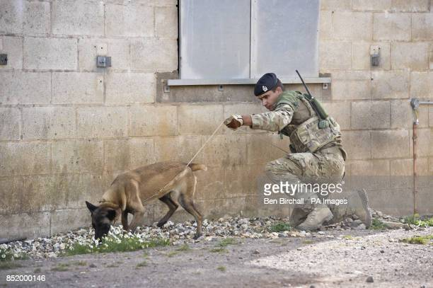 Amy the fouryearold Belgian Shepherd search dog and handler Private Danny Greenhalgh Royal Veterinary Corp 23 from Wolverhampton both complete a...