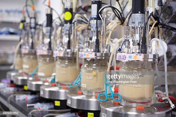 Amyris yeast fermentation room where new strains of yeast are tested before going to large production facilities in Brazil at Amyris labs in...