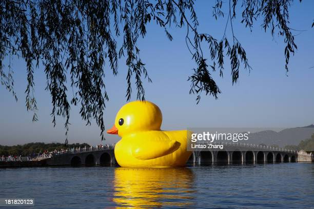 An 18meter high rubber duck sits in the Summer Palace Kunming Lake on September 26 2013 in Beijing China After touring 13 cities in 10 countries the...
