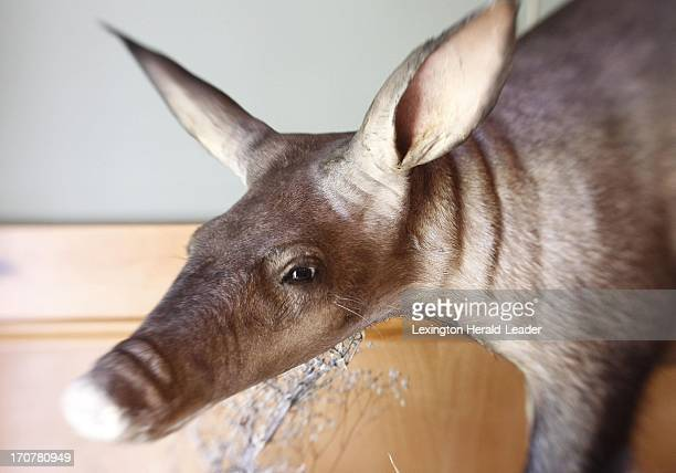 An Aardvark taken in the Kalahari Desert is displayed on the wall of Shelby County housewife and greatgrandmother Marty Mason who is among 10...
