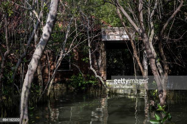 An abandoned house which has been surrounded by mangrove caused from rising sea level at Bedono village on June 7 2017 in Demak Indonesia Indonesia...