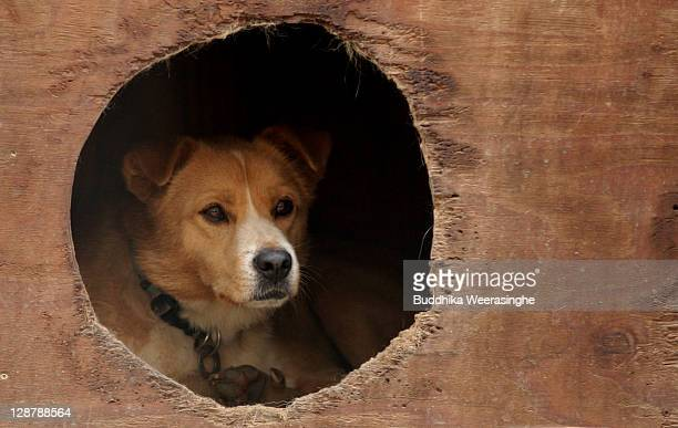 An abondoned dog from Fukushima rests during the annual festival at Happy House on October 8 2011 in Osaka Japan The NPO Japan Animal Trust are...
