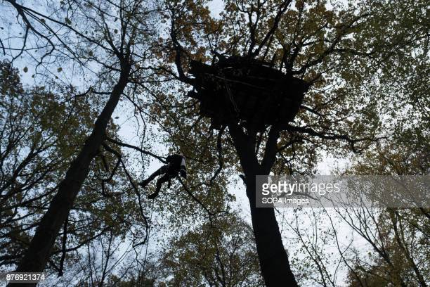 An activist climbs a rope to reach one of the highest tree houses in the woods Starting in 2012 the Hambach Forest occupation settlements have slowed...