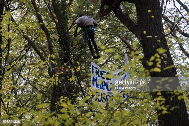 An activist crosses a rope bridge between two tree houses Starting in 2012 the Hambach Forest occupation settlements have slowed the expansion of the...