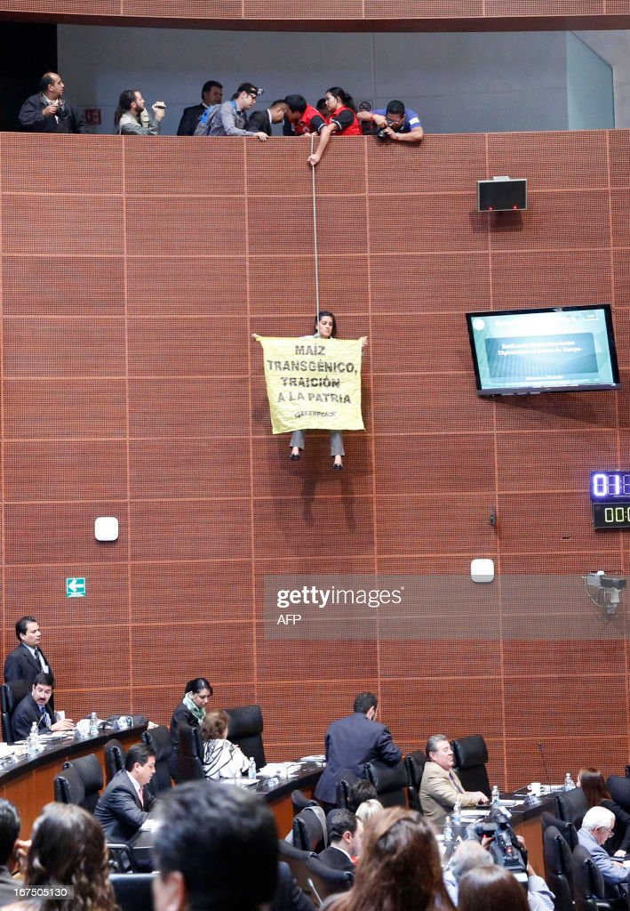An activist of the global environmental watchdog Greenpeace (C) demonstrates against transgenic corn at the Mexican Senate, in Mexico City, on April 25, 2013. Greenpeace protests against the sowing of transgenic corn in Mexico.