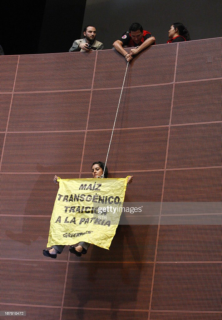 An activist of the global environmental watchdog Greenpeace hangs from a rope with a sign reading 'Transgenic corn, treason to the homeland' at the Mexican Senate, in Mexico City, on April 25, 2013. Greenpeace protests against the sowing of transgenic corn in Mexico.