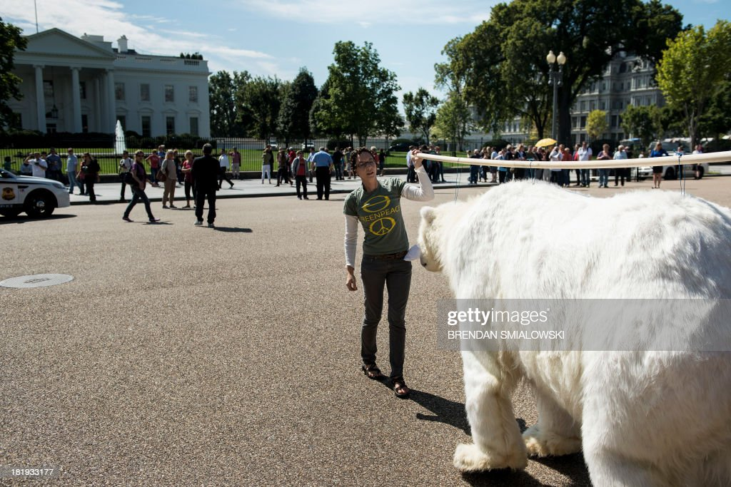 An activists carries a polar bear costume toward the White House during a protest in Lafayette Park September 26, 2013 in Washington, DC. Environmental activists gathered to protest the practice of arctic drilling and pressure the Obama administration to do the same. AFP PHOTO/Brendan SMIALOWSKI