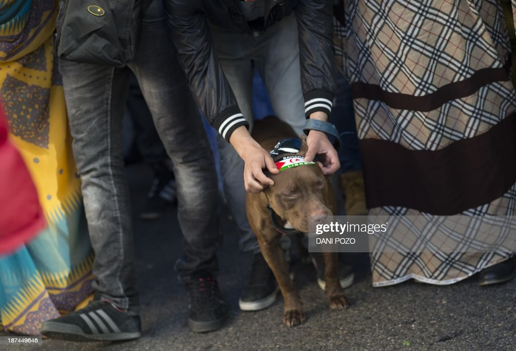 An activists for the independence of the Western Sahara places a sticker on a dog during an annual protest organised by the state coordinator of associations of solidarity with the Sahara in Madrid on November 9, 2013 marking the 38th anniversary of the tripartite Madrid agreements demonstrators deem illegal. The Western Sahara is a territory bordered by Morocco and Algeria and disputed by Spain and Morocco who both claiming sovereignty.