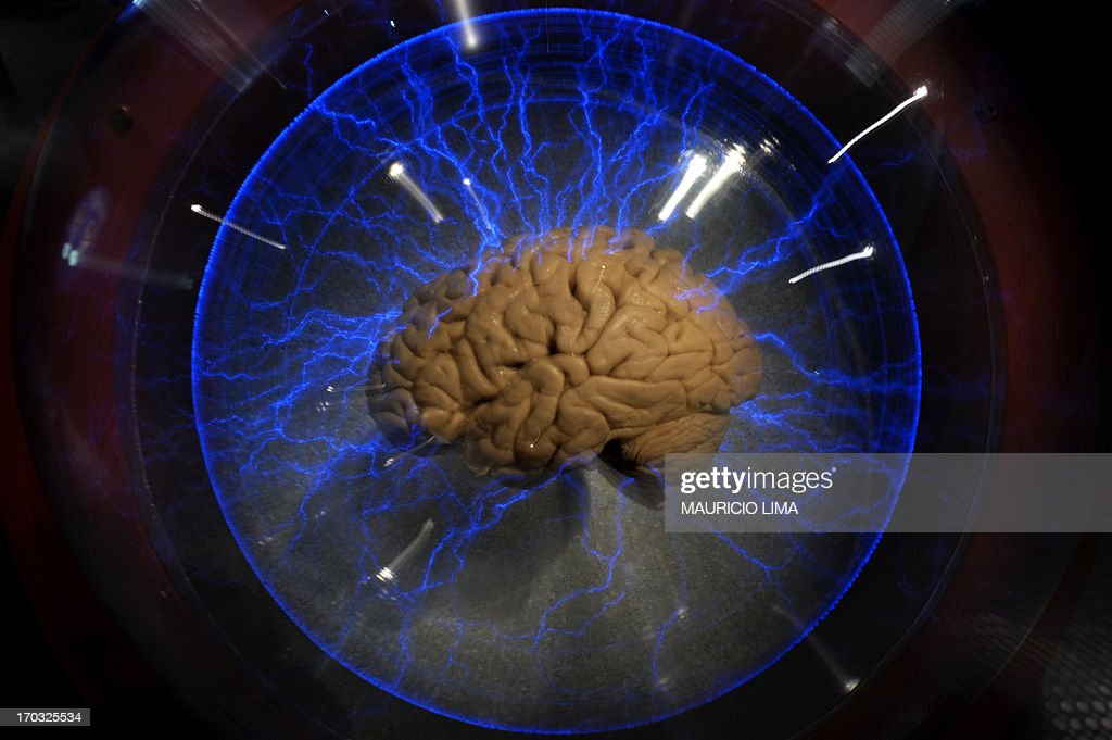 An actual human brain displayed inside a glass box as part of an interactive exhibition 'Brain a world inside your head' in Sao Paulo Brazil on...