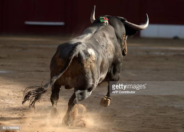 An Adolfo Martin Andres bull runs inside the Plumacon arena in Mont de Marsan during the festival of La Madeleine southwestern France on July 23 2017...