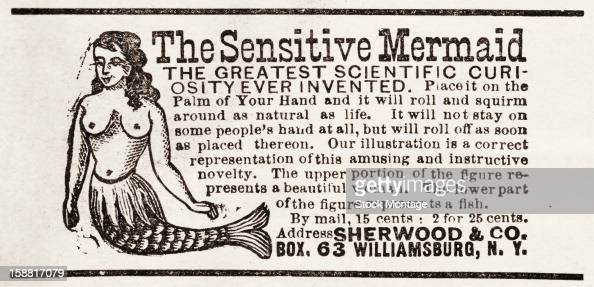 An advertisement for 'The Sensitive Mermaid' a novelty item 1884 Accompanied by an illustration the text reads in part 'The Greatest Scientific...
