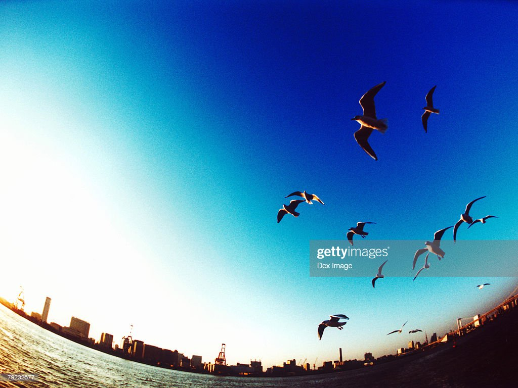 An aerial fisheye lens view of Tokyo Bay, Japan, Seagulls flying : Stock Photo