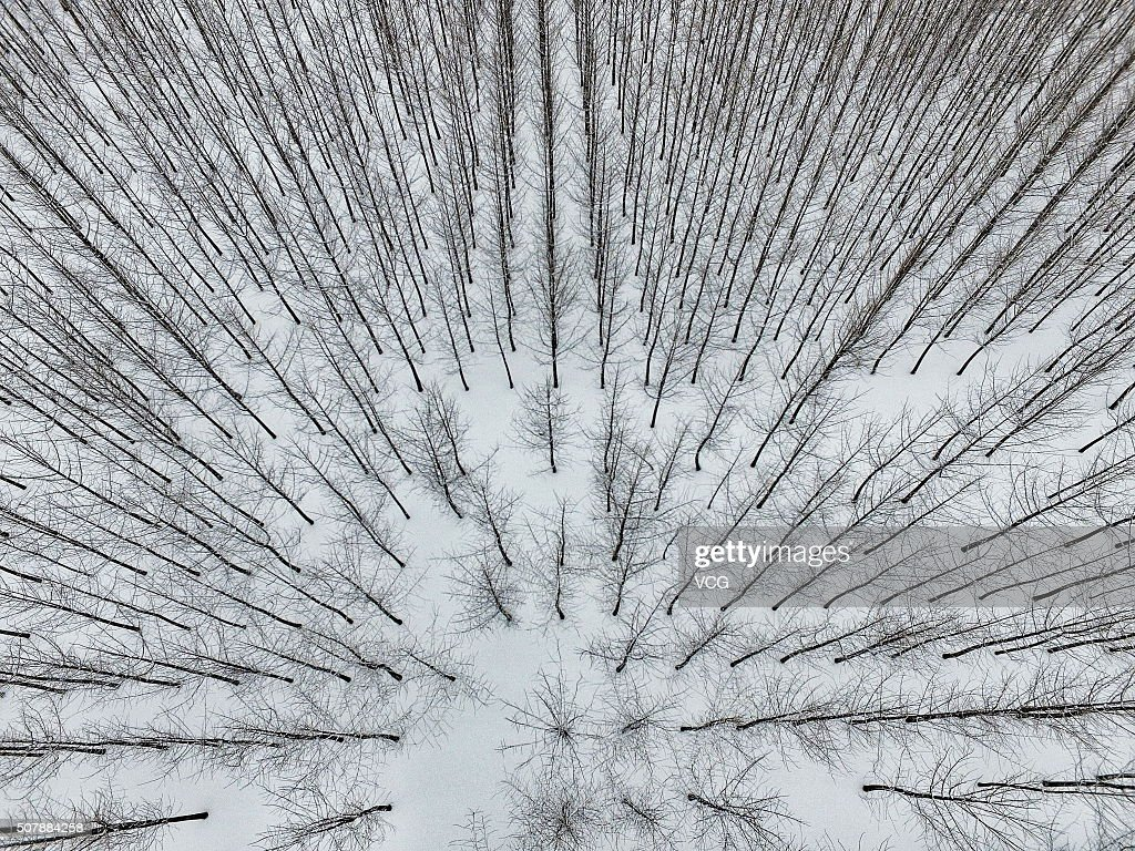 An aerial view of snow-covered gingko trees at the Tomb of Emperor Jingdi on January 31, 2016 in Xi An, China. Heavy snow hit Xi'an, capital of northwest China's Shaanxi province, on Sunday.