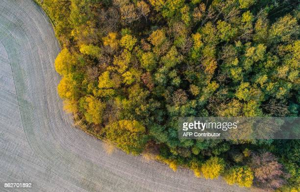 An aerial view shows trees with autumn leaves in a forest near Petersdorf eastern Germany on October 17 2017 / AFP PHOTO / dpa / Patrick Pleul /...