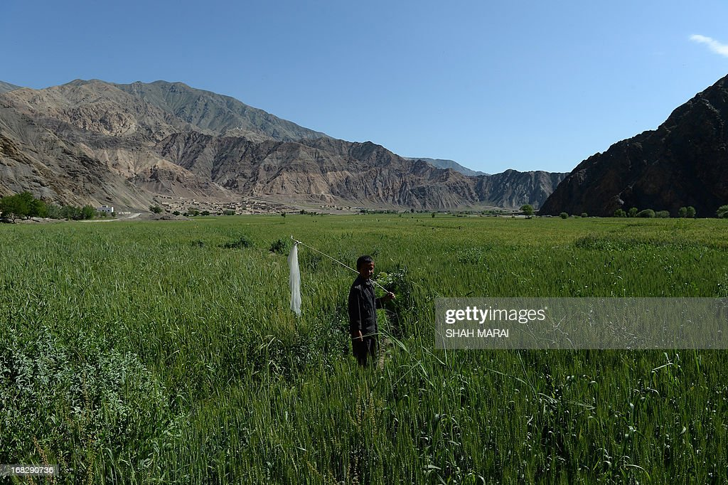 An Afghan boy holds a stick as he stands in a wheat field in Qara Zaghan village in Baghlan province on May 7, 2013. Afghanistan is one of the world's poorest countries where unemployment is at 40 percent and half the population is under the poverty line. AFP PHOTO/ SHAH Marai
