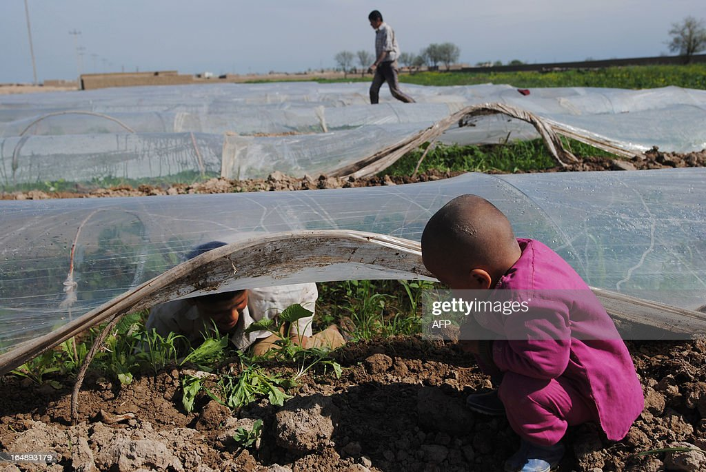 An Afghan boy looks at vegetables growing on the outskirts of Mazar-i Sharif on March 28, 2013. Some nine million Afghans or 36 percent of the population are living in 'absolute poverty' while another 37 percent live barely above the poverty line, according to a UN report. AFP PHOTO / Farshad USYAN