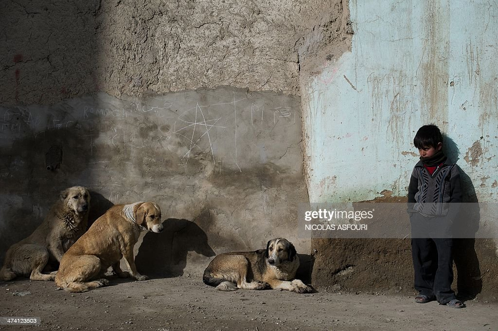 An Afghan boy stands on a street next to dogs in Kabul on February 22, 2014. Afghanistan's economy is recovering from decades of conflict but despite the significant improvement in the last decade it is extremely poor, and highly dependent on foreign aid. AFP PHOTO/ Nicolas ASFOURI